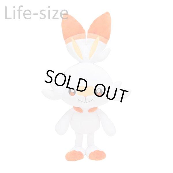 Photo1: Pokemon Center 2019 Life-size Plush doll Scorbunny (1)